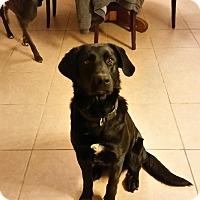 Adopt A Pet :: Jax - Louisville, KY
