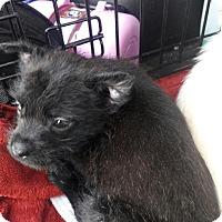 Adopt A Pet :: Giselle - Thousand Oaks, CA
