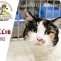 Adopt A Pet :: Callie - Davenport, IA