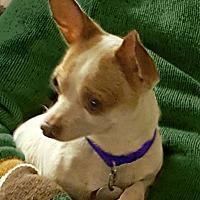 Adopt A Pet :: Radar - Redondo Beach, CA