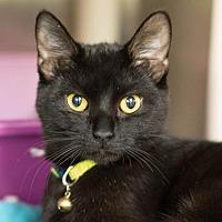 Adopt A Pet :: Beverly - Fargo, ND
