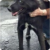 Adopt A Pet :: BlackJack - Oceanside, CA