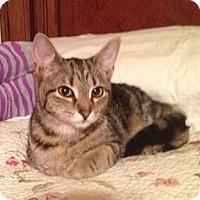 Adopt A Pet :: Kiley - Pittstown, NJ