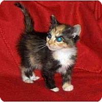 Adopt A Pet :: Mindy - Richmond, VA