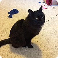 Adopt A Pet :: Jet - Ogallala, NE