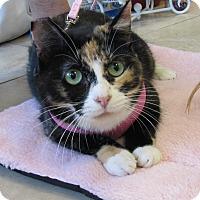 Adopt A Pet :: Baby - Lighthouse Point, FL