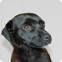 Adopt A Pet :: Slinky - Greeley, CO