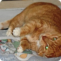 Adopt A Pet :: chelsea - brewerton, NY
