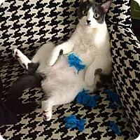 Adopt A Pet :: Audrey - Idyllwild, CA