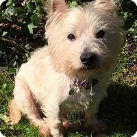 Adopt A Pet :: Murphy - Atlanta, GA