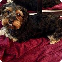 Adopt A Pet :: Joey - Temecula, CA
