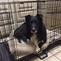 Adopt A Pet :: Mason - Allen, TX