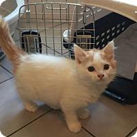 Adopt A Pet :: Zayn - Melbourne, FL