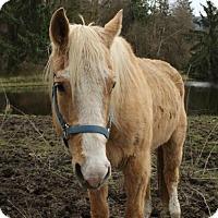 Adopt A Pet :: Boo - Bellingham, WA