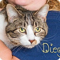 Adopt A Pet :: Diego - Somerset, PA