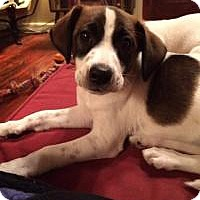 Adopt A Pet :: Lennox - Marlton, NJ