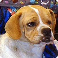 Adopt A Pet :: Rosemary - Wildomar, CA