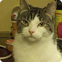 Adopt A Pet :: Molly - Pittstown, NJ