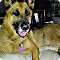 Adopt A Pet :: Zoe - Norwalk, CA