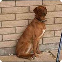 Adopt A Pet :: URGENT - Sierra Vista, AZ