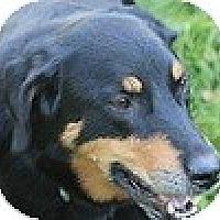 Adopt A Pet :: Buddy - Hamilton, ON
