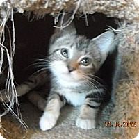 Adopt A Pet :: Bianca 2 - Riverside, RI