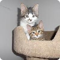 Adopt A Pet :: Scotty & Timmy - Arlington, VA