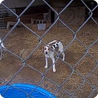 Adopt A Pet :: Petey - Allentown, PA