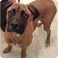 Adopt A Pet :: Cheelios - Albany, GA