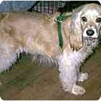 Adopt A Pet :: Mitzy - dewey, AZ