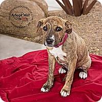 Adopt A Pet :: Ruby - Mesa, AZ