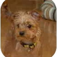 Adopt A Pet :: Leo-Pending - Grove City, OH