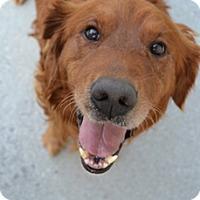 Adopt A Pet :: Fletcher - Windam, NH