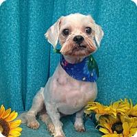 Adopt A Pet :: Shaggy-Courtesy Post - Acushnet, MA