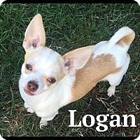 Adopt A Pet :: Logan - Indian Trail, NC
