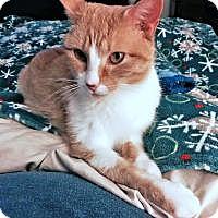 Adopt A Pet :: Ginger - Bartlett, TN