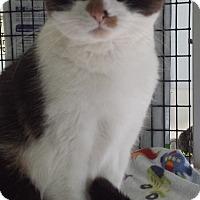 Adopt A Pet :: Momo - Diamond Springs, CA