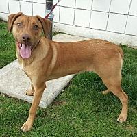 Adopt A Pet :: Spike - Modesto, CA