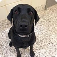 Adopt A Pet :: Nadia - Aiken, SC