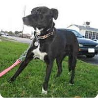 Adopt A Pet :: Reggie - Sun Valley, CA