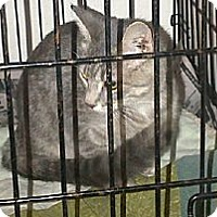 Adopt A Pet :: Gracie - Walnut, IA