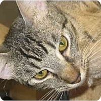 Adopt A Pet :: Paddymack - Deerfield Beach, FL