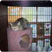 Adopt A Pet :: Danka - Grand Rapids, MI