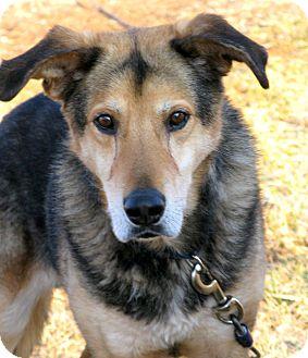 German Shepherd Dog Mix Dog for adoption in Indianapolis, Indiana - Henry