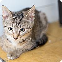Adopt A Pet :: Dorito - Athens, GA