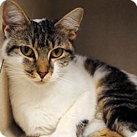 Adopt A Pet :: Roxanne - East Hartford, CT