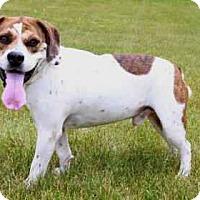 Adopt A Pet :: Baxter - Warsaw, IN