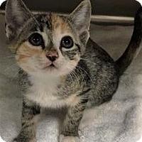 Adopt A Pet :: Beasley - Chattanooga, TN