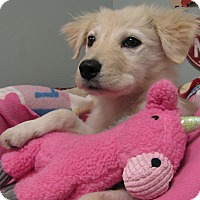 Adopt A Pet :: Elsa - Groton, MA