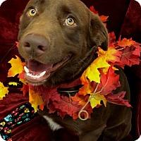 Adopt A Pet :: Dak - Coppell, TX